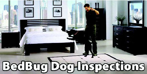 BedBug Dog Canine Inspection NYC