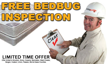 Captivating Bedbug Exterminator NY ...
